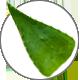 AloeVerave04y6gmctCyV